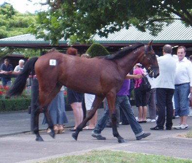 Big Is Good yearling sale