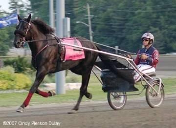 Sutter Hanover as a racehorse