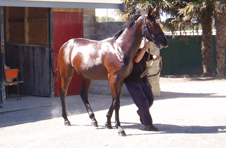 Angus Fogg yearling