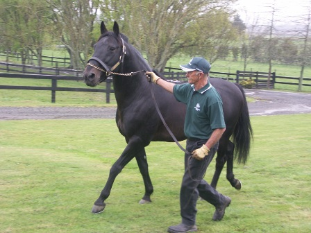 Bettor's Delight at Woodlands Stud NZ