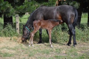 Lancome and foal