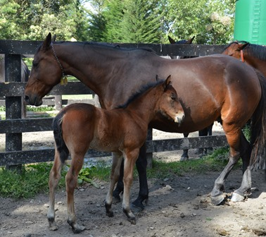 Stunning and her Tintin In America foal