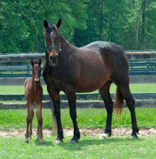 Lady Ashlee Ann with her recent Bettor's Delight foal. (Photo from Winbak Farm website)