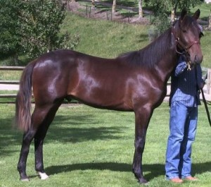 Six Diamonds yearling colt