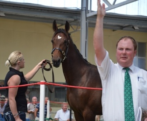 Lot 45 Christchurch, a Sundon colt with a good trotting pedigree and nice looking type goes for just $6000.