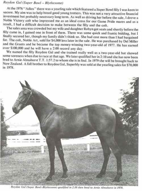 Roydon Gal in foal