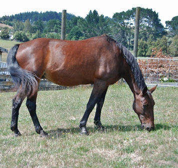 Urgent Need 27yo mare