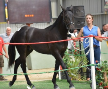 Lot 36 Christchurch - Pacific Arden by Panspacificflight from Scherger Rein