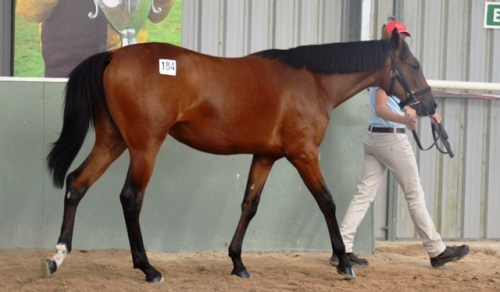 Lot 184 Art Official filly from Christian Cullen mare