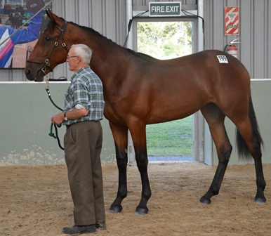 Lot 191 Art Official filly don't Pass I'm Fast