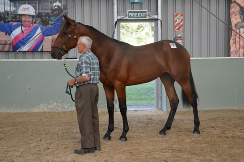 Lot 199 Art Official filly from Wingspread mare