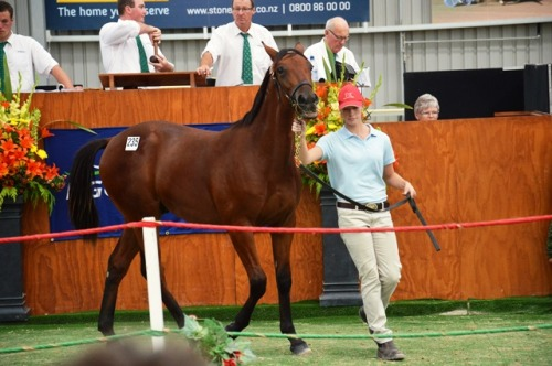 Lot 235 Hashtag an Art Offical colt