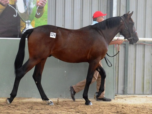 Lot 324 Art Official colt from a New York Motoring mare