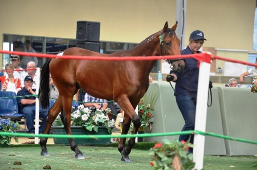 Lot 81 Art Official colt from Sokys Atom mare