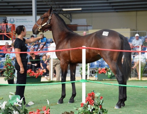 Lot 123 a Real Desire colt  from All My Art, the dam of Ohoka Nevada, et al. He was bought for $6000.