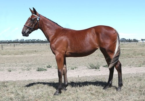 Lot 49 Gotta Go Cullect filly from Washington VC mare. She's a half sister to the very talented Lochaburn.