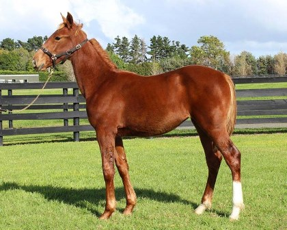 Lot 44 - Shadow Play x  Splish Splash Filly