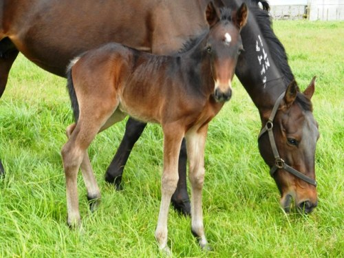 Sophie's Choice and her colt foal by Tintin In America