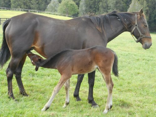 Tintin In America x Sophie's Choice foal