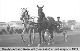 Greyhound and Rosalind trotting i