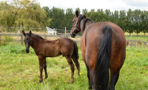 The Blue Lotus and Shadow Play colt a