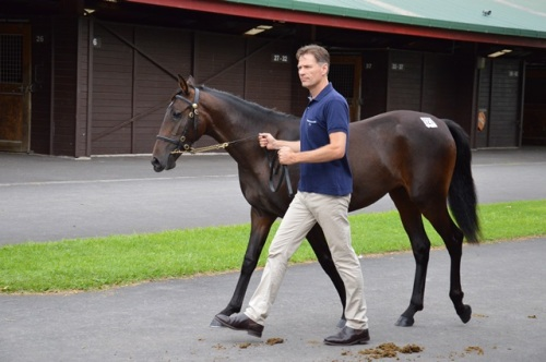 Lot 127 Lis Mara filly