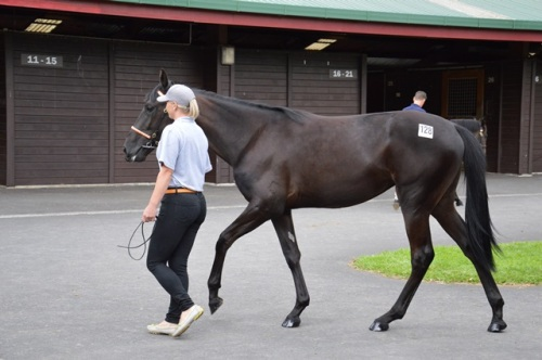 Lot 128 Big Jim filly
