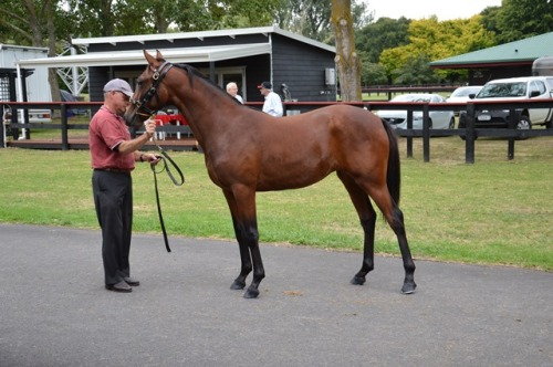 Lot 44 De Lovista filly from De Lovely