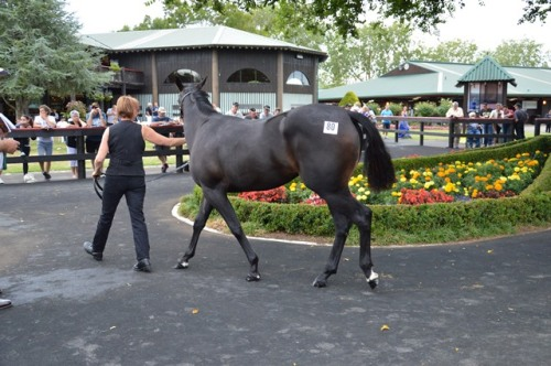 Lot 80 filly byTintin In America