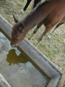 Foal reflecting