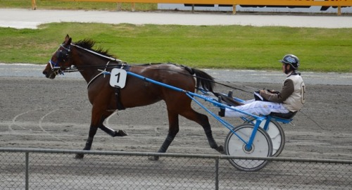 High Gait 2yo trotter