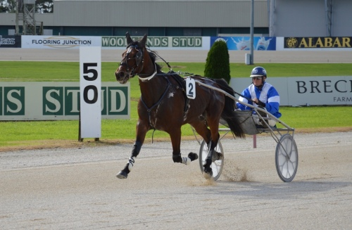 Angus Fogg 3yo trotting colt by Angus Hall from Sun Isa.