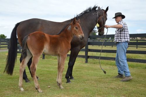 Filly foal A Rocknroll Dance x The Blue Lotus