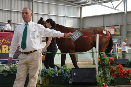 Bid spotter Christchurch yearling sales