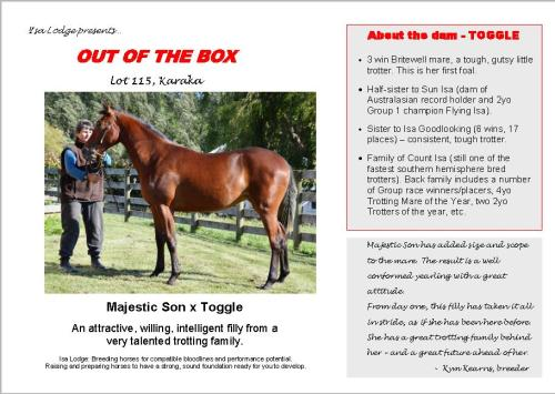 Out Of The Box yearling trotter