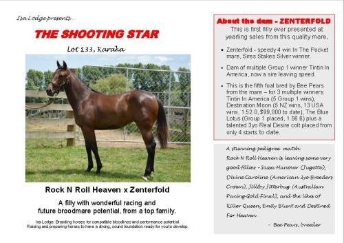 The Shooting Star yearling pacer