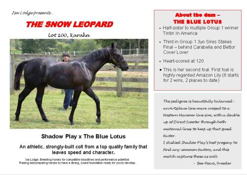 The Snow Leopard yearling pacer