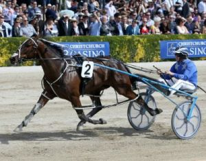 Benecio, the Australian bred Rock N Roll Heaven x Miss Brazillian, trained by Purdon/Rasmussen in New Zealand.