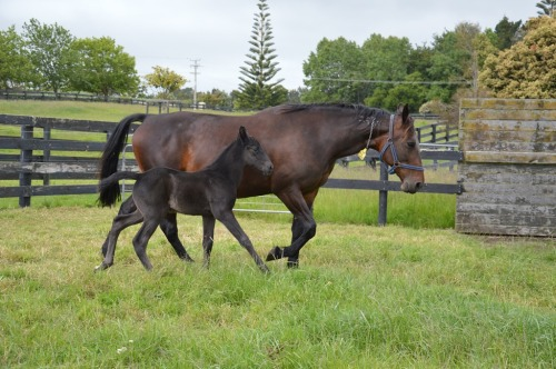 The Blue Lotus with her Shadow Play filly