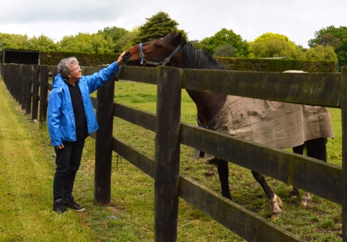 Bee Pears and Tintin In America at Nevele R Stud