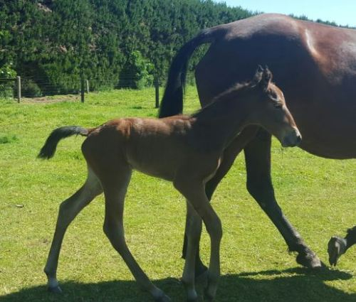 Mr Feelgood filly
